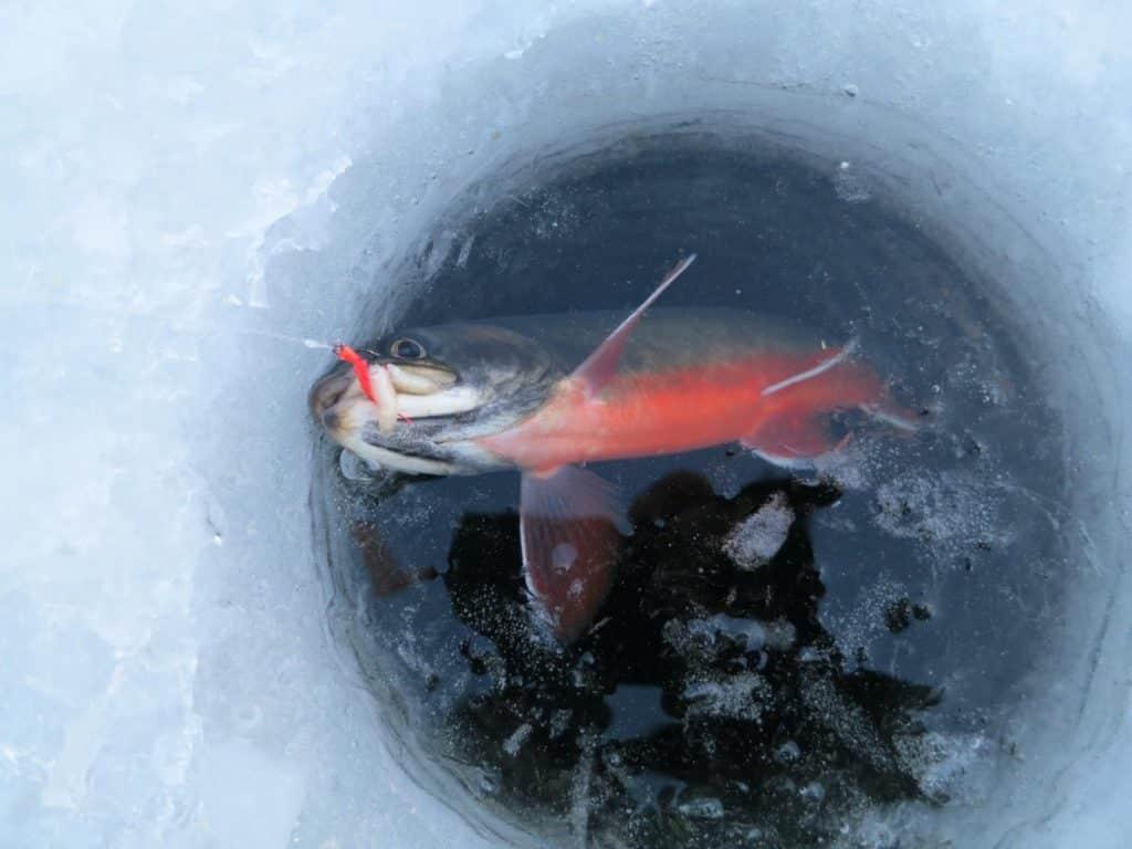 Isfiske